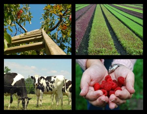 farm and agriculture insurance